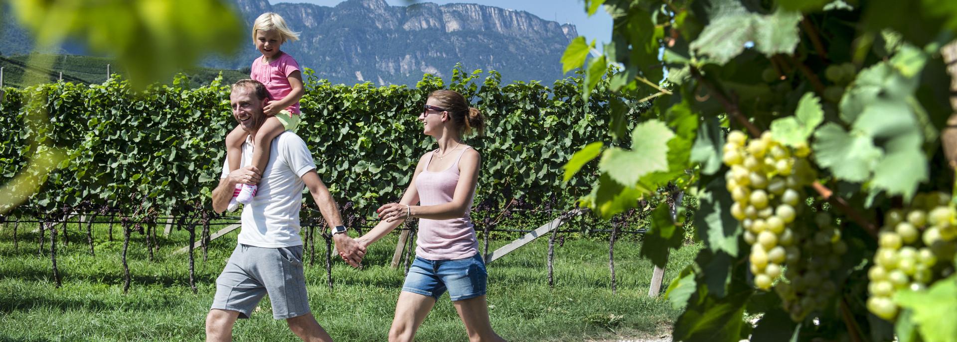 Spaziergang in den Weinbergen um Kaltern - Urlaub im Weinhotel Südtirol