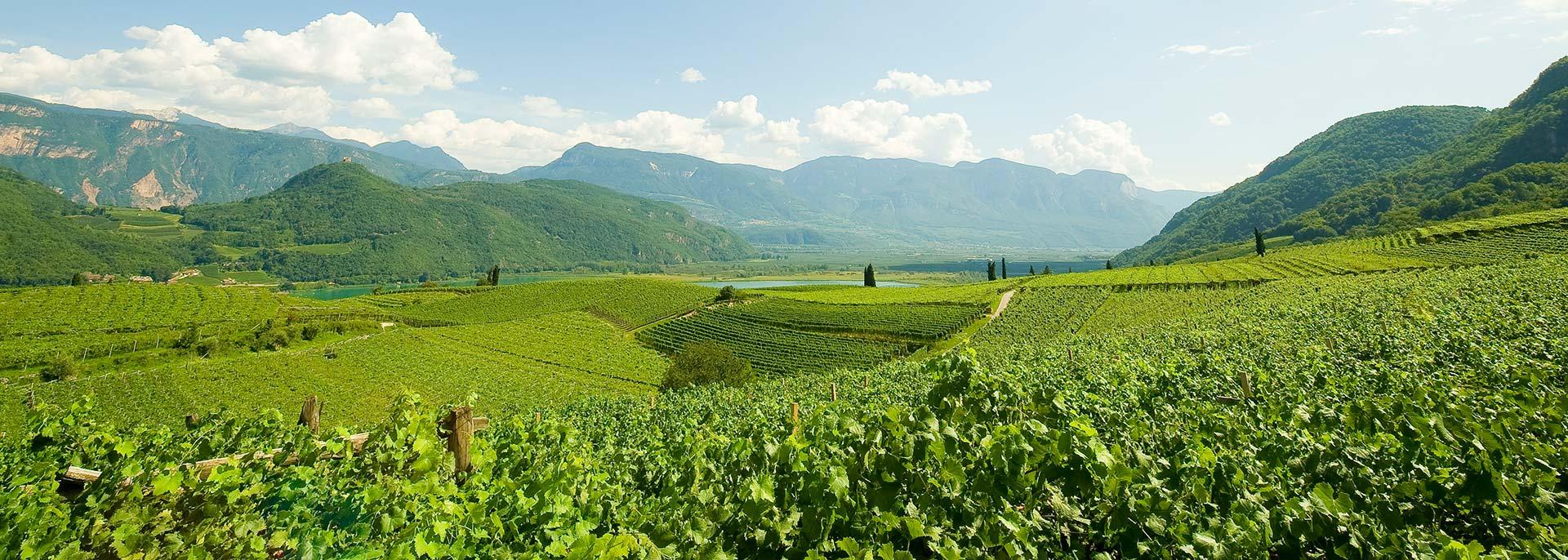 Das Weinhotel in Südtirol direkt in den Weinbergen: Ihr Hotel Kaltern