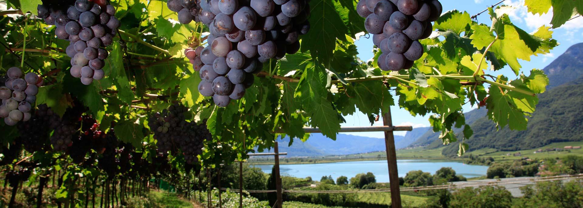 Südtirol Urlaub in den Weinbergen: im Weinhotel direkt am Kalterer See